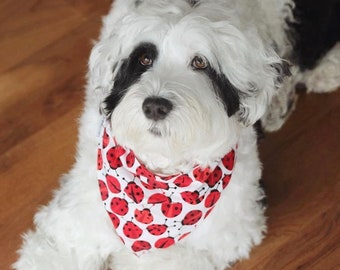 Personalized Dog Bandanas - Ladybugs Reversible Pet Scarf -  Custom Puppy Dog Gifts by Three Spoiled Dogs