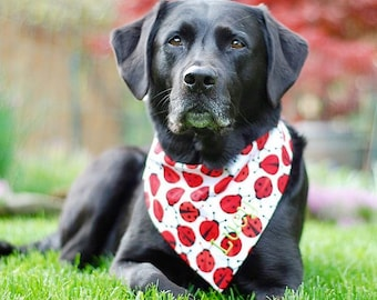 Summer Dog Bandana, Personalized Dog Bandana, Dog Neckerchief, Reversible with Ladybugs and Opposite Side Dots, Black and Red, Personalized