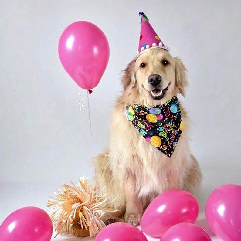 Birthday Dog Bandana Personalized