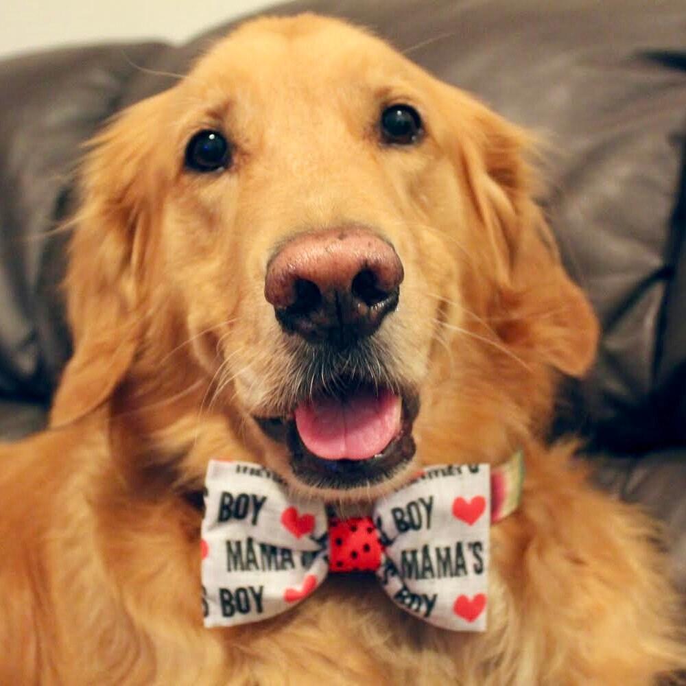 57dbda7aa Monogram Dog Bow Tie - Personalized Argyle Pet Bow Tie - Houndstooth ...