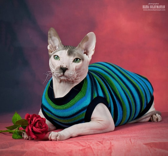 Kitty Sweater Clothing For Cats Hairless Cat Cat Apparel Etsy