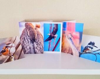 Photo bird cards, Set 2