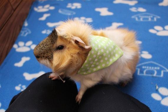 bandana for guinea pig bandana for bunny bandana for ferret Cute Bandana for small pets