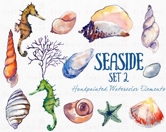 Watercolor Sea Shells Clipart, Instant Digital Download, Hand-Painted Ocean, Beach, and Nature Graphics-  Seaside Part 2