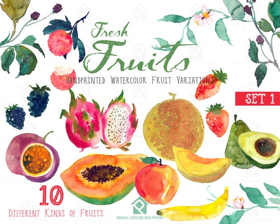 Fruits watercolor clipart - Watercolour Fruit Painting Direct Download - Papaya, blackberry, passion fruit - Fresh Fruits (Set 1)