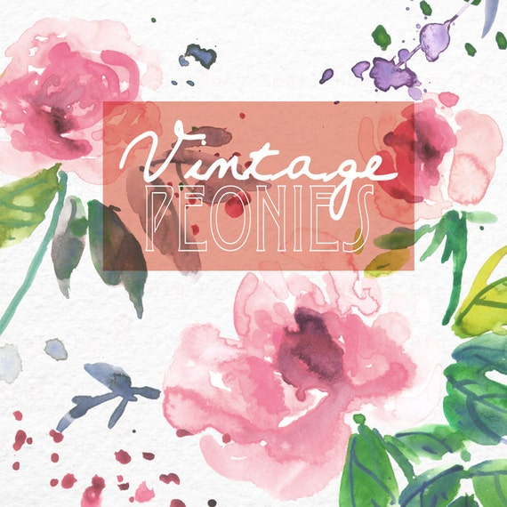 Watercolour Floral Clipart: Pink Peonies, Watercolour Clip Art/Flowers/Individual PNG files/Hand Painted-Vintage Peonies