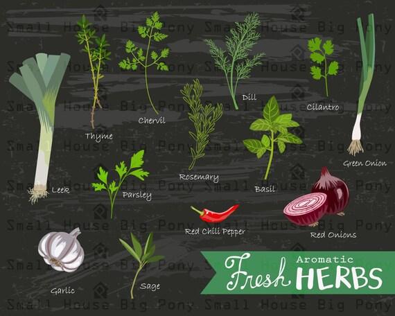 Fresh Herbs Clipart, herbs Clip art, plants Clipart, kitchen print clip art, Kitchen poster Clip Art