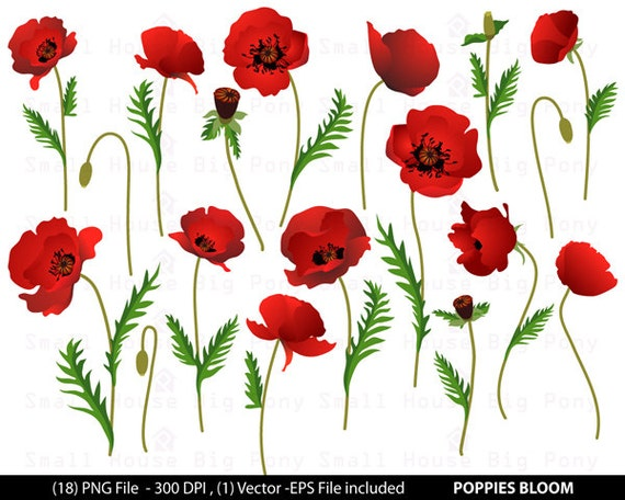 Poppies clip art, digital clip art, modern blooms blossoms - Poppies Floral - Digital Clip Art