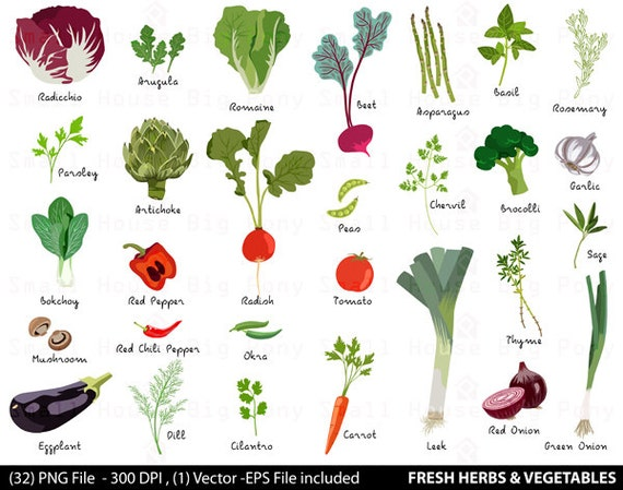 Vegetable Digital Clipart, Fresh Herbs Clipart, Vegetable Clip Art, Herbs Clipart, Fresh Vegetables Clip Art, Food Clipart, Produce Clip Art