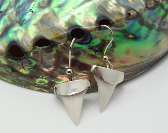 Genuine Shark Teeth Earrings - Handmade Douglas Hughes