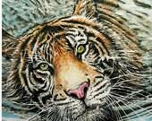 "8x10 w/ Mat - ""Tiger in..."