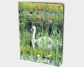 The Swan Notebook Photo A...