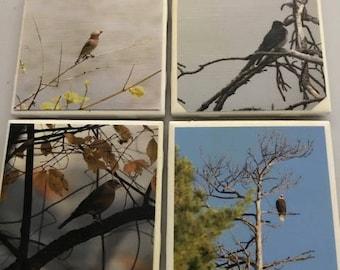 Set of 4 waterproof bird photo coasters