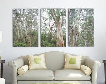 Eucalyptus Forest Triptych  | Great Ocean Road, Australia ~ Trees, Forest, Nature and Plant Photography, Koala, Green, Landscape, Melbourne
