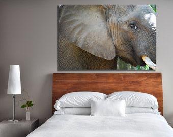 Up Close   Elephant Sanctuary, Knysna, South Africa ~ African Animals ~ Safari Photography ~ Photography on Canvas