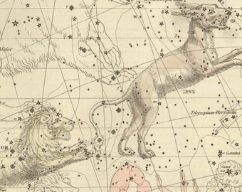 Vintage Lynx and Leo Minor Constellation Celestial Map - Astronomy Gift - Astrology Art Prints - Zodiac Sign - Restoration Style Wall Decor