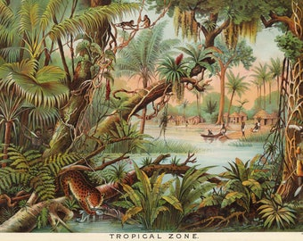 Yaggys Tropical Zone Geographic Print - Gift for Geologist - Restoration Jungle Decor - Natural Science Poster - Geography Nature Art