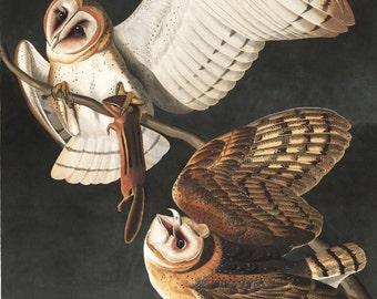 Audubon Barn Owl Art Print - Vintage Art Print - Nature Art - Bird Painting - Nature Print - Owl Decor - Bird Art - Old Maps and Prints