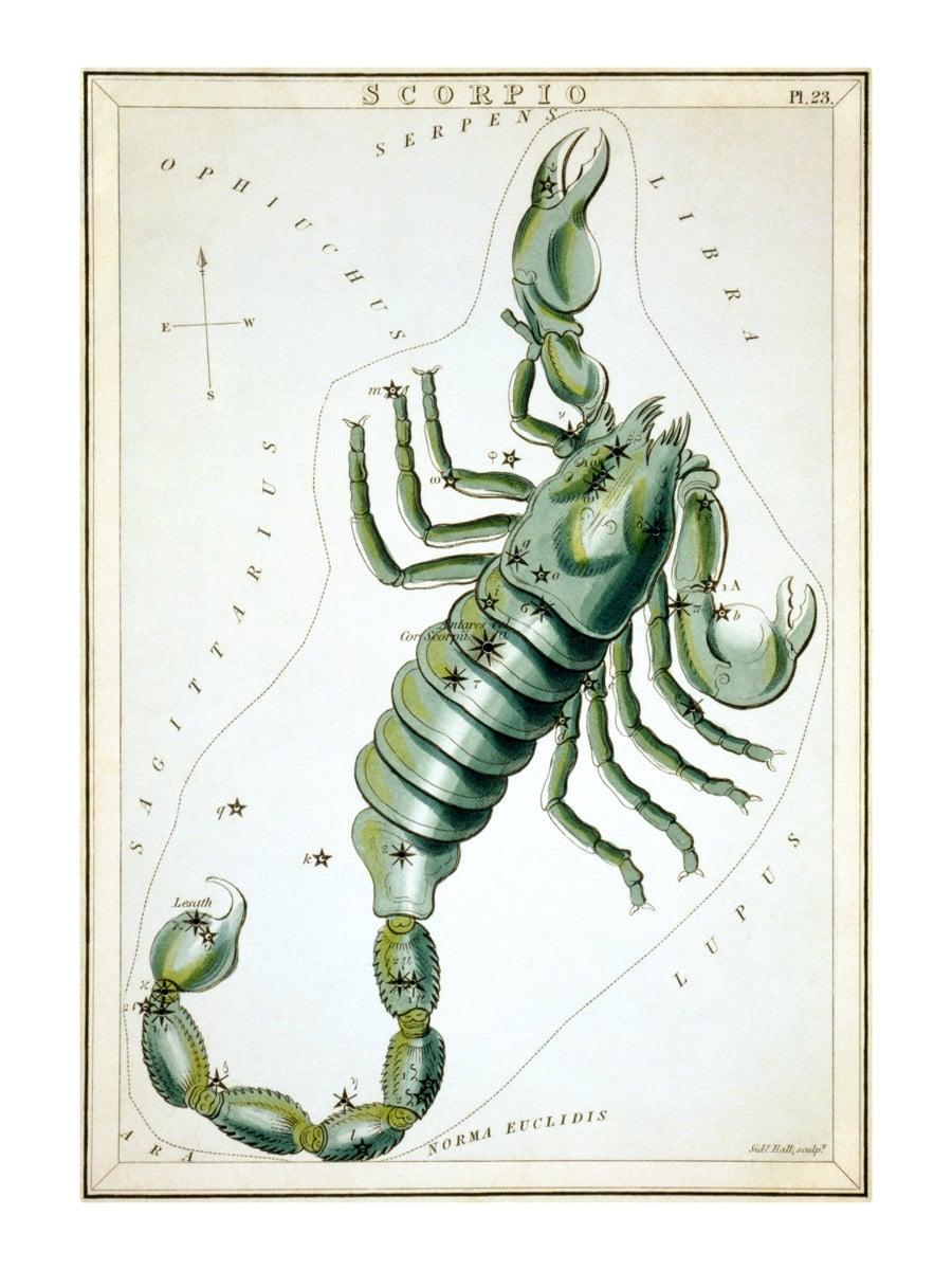 Scorpio Vintage Zodiac Sign Astrological Art Print