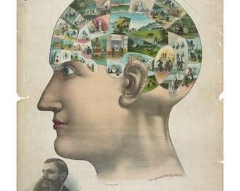Phrenology Poster - Vintage Art Print - Antique Advertising Sign - Old Maps and Prints - Advertising Art - Medical Ephemera - Psychology