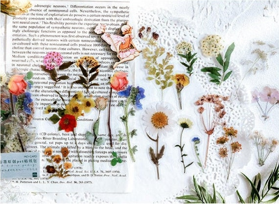 Rose Botanicals Leaves Clear Sticker Bullet Journal Cotton Plant Daisy Scrap booking 40 Pcs Flowers Clear Sticker Filofax Stickers