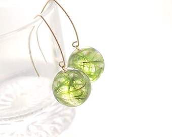 Real Wild Moss in Resin with 14Kgf V-Hook Earrings