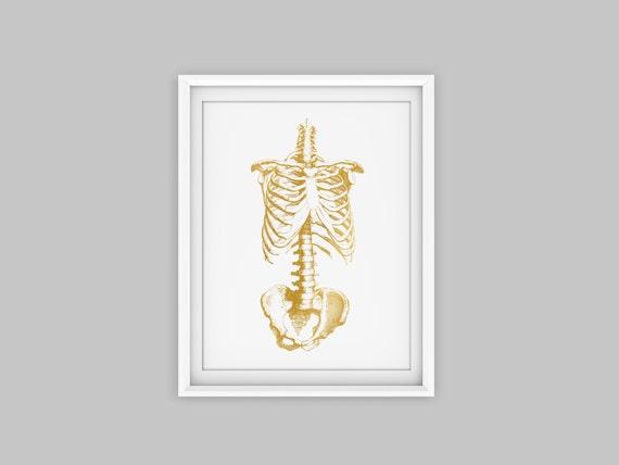 Anatomie Brustkorb menschlichen Brustkorb Anatomie