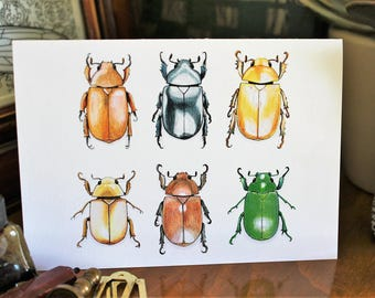 Christmas beetles CARD. Blank inside