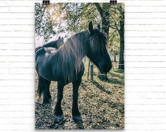 Farmhouse Decor Horse Print, Equine Art Horse Photography, Farm Animal Print Equestrian Decor, Horse Lover Gift, Horse Wall Art