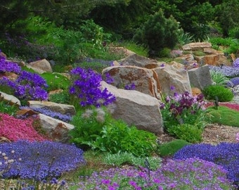 c6f95c77649 Rock Garden Perennials Flower Seeds 200+Seeds