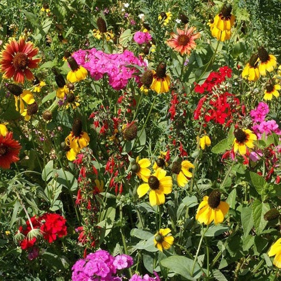 7g+Seeds Wildflower Mountain Mix Seeds
