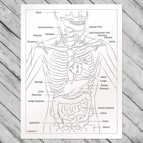 Human Anatomy Giant Coloring Poster Educational Coloring Pages By Chromantics
