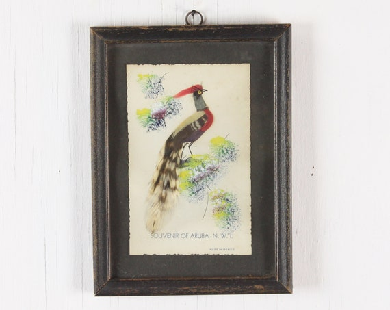 Vintage Faux Taxidermy Bird - Souvenir of Aruba - Yellow/Red/Green/Blue - Black Frame - Vintage Home Decor - Vintage Interior