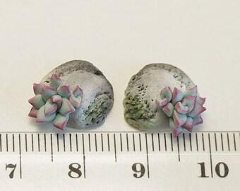 Mint Succulent earrings. Stone Succulent Stud earrings. Polymer clay jewelry. Clay Plant Earrings Post. Wedding Succulent. Stone earrings