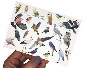 Set of 3x Birds postcards