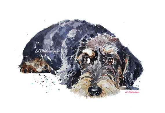 Wirehaired Dachshund Print Watercolour Wire Doxie Etsy