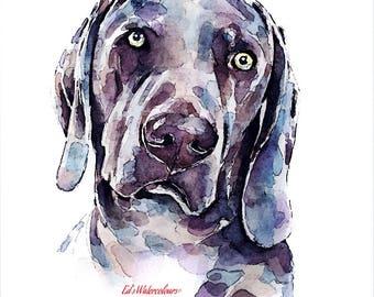 "Weimaraner 5"" Print Watercolour A3 (30*40cm/16*12 Inches)"