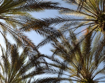 Palm Trees. Blue sky. Outdoor photography. Wall art.