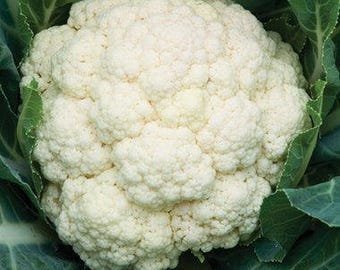 Cauliflower Seeds - Amazing Cauliflower - David's Garden Seeds - Amazing Cauliflower Seeds