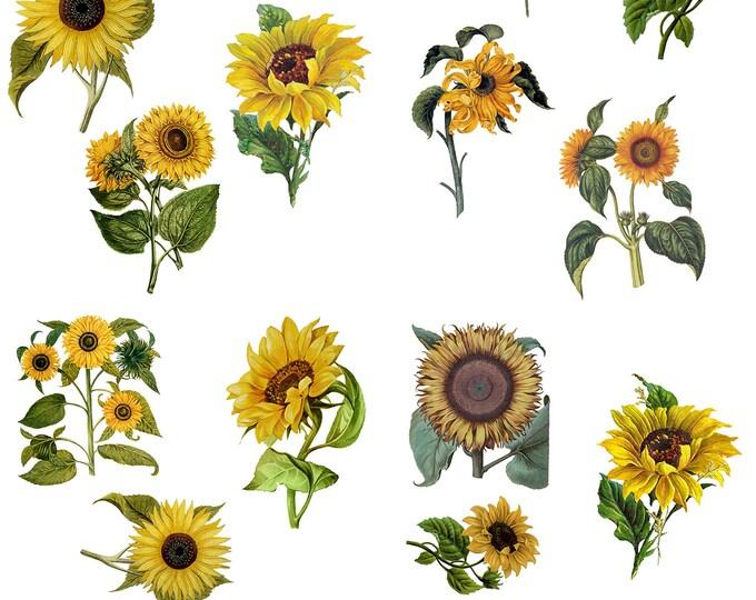 Sunflower Dixie Belle transfer, flower Transfers,  sunflower transfer , Dixie Belle Transfer, Free shipping