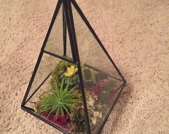 Hanging moss terrarium