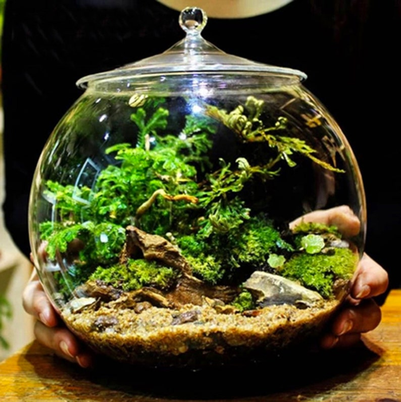 Glass Terrarium Container Bell Jars with Cover Large image 0