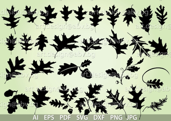 Vector 30 Oak Leaves Ai Eps Svg Dxf Pdf Png Jpg Etsy
