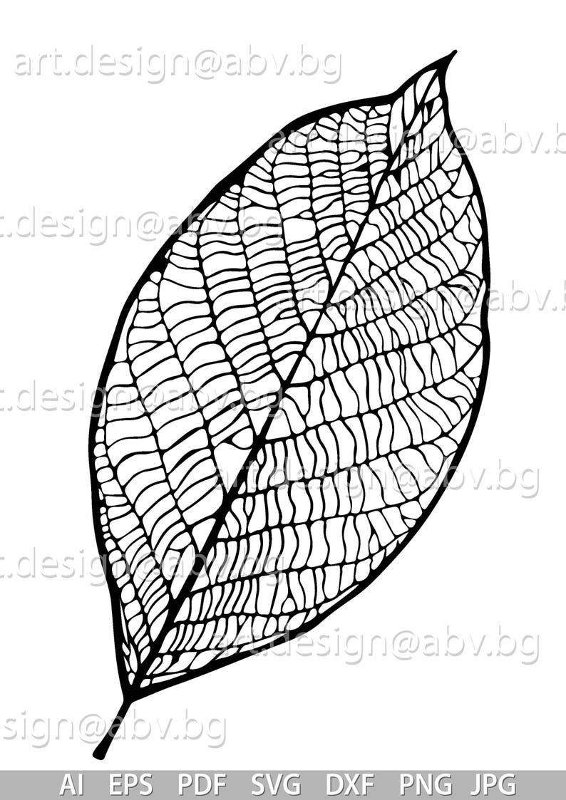 Vector Leaf Veins Ai Eps Pdf Png Svg Dxf Jpg Image Etsy