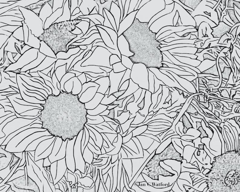 Kleurplaten Zonnebloemen.Zonnebloemen 1 Volwassen Kleurplaten Pagina S Pagina Etsy