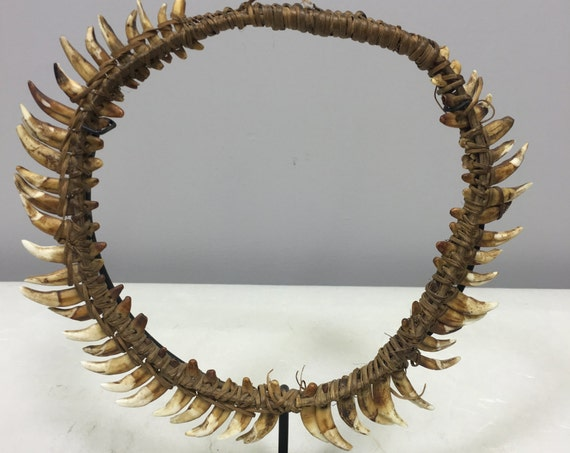 Papua New Guinea Necklace Dog Teeth Boiken Brides Price Currency Dog Teeth Necklace