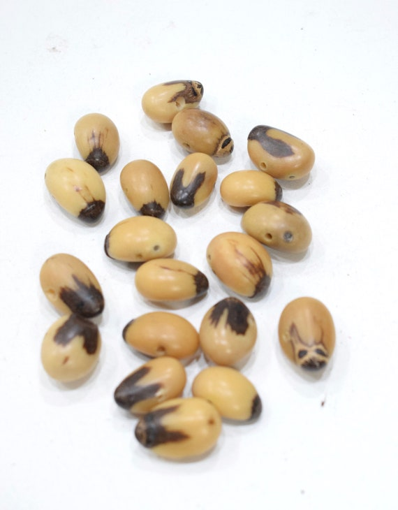 Beads Philippines Natural Oval Buri Nut  20mm