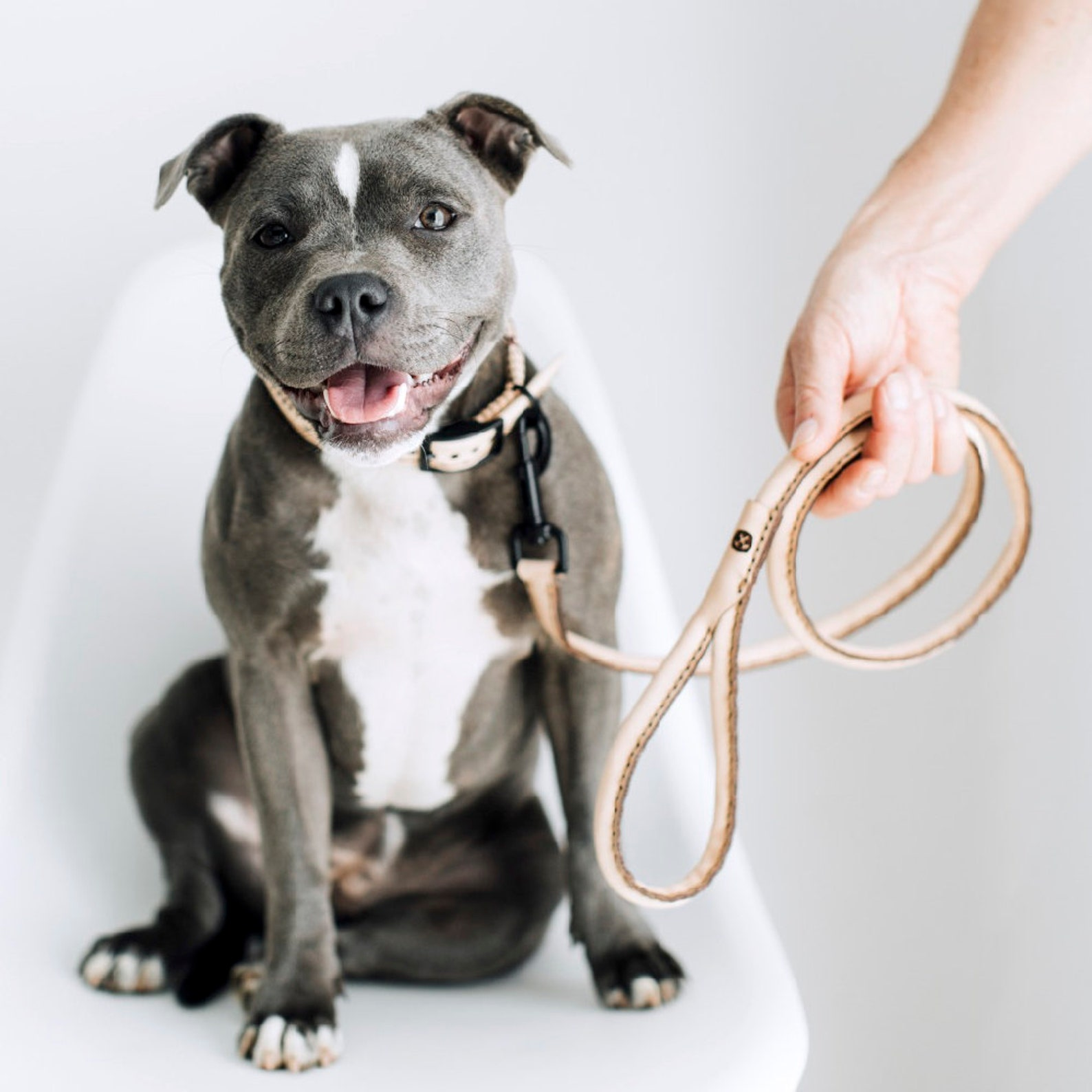 Dog posing with leather leash