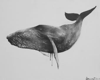 Framed Whale Print