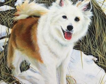Icelandic Sheepdog, Giclee PRint